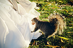 quirrel and a bride